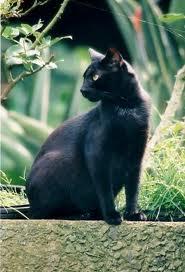 Un gato en el trigal